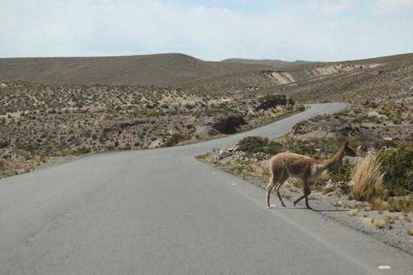 Peru-0525