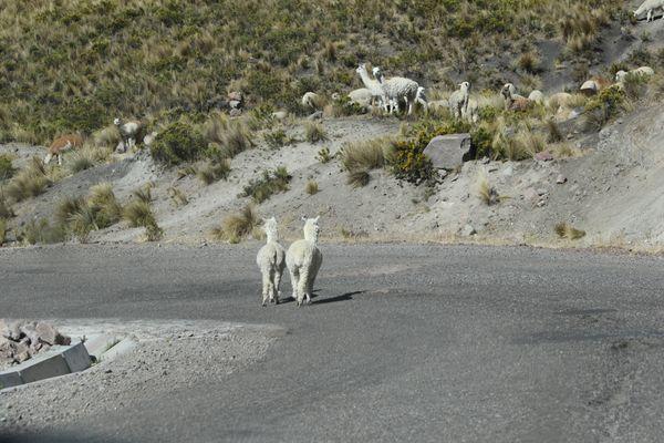 Peru-0535