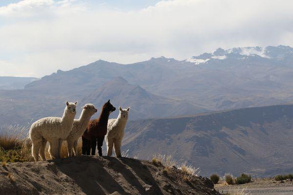 Peru-0536